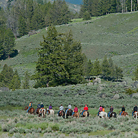I guide leads tourists on a horseback ride near Roosevelt Junction in Yellowstone National Park, Wyoming.