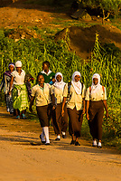 Muslim school girls walking to school, near Queen Elizabeth National Park, Uganda.
