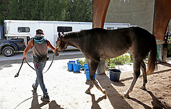 At Gulfstream racetrack, Pinky, a Florida bred filly that has won 7 races in her short career is loaded in a transport trailer. Jerry Bennett had already taken 30 of his horses to Ocala and was loading another 10 for the journey before Hurricane Irma. (Photo by Mike Stocker /Sun Sentinel/TNS/Sipa USA)<br />