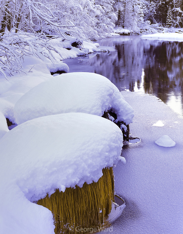Morning after Snowstormalong the Merced River,Yosemite National Park, California