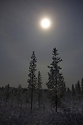 """Moonlight showing through snowclouds above the taiga, December 2011.  Image made during the long hours of the polar night, in boreal forest, beside Lake Muddusjärvi, Inari, Lapland, 300km north of the Arctic Circle in Finland. This mage can be licensed via Millennium Images. Contact me for more details, or email mail@milim.com For prints, contact me, or click """"add to cart"""" to some standard print options."""