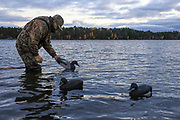 """Dave Evenson placing one of 49 wooden decoys at MacQuarrie Site No. 2, """"MacQuarrie Point"""" at Shallow Bay, Washburn County, WI. Eleven of the decoys in the spread were owned and used by Gordon MacQuarrie and the ODHA, Inc."""