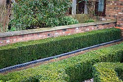 Low clipped hedge of Buxus sempervirens - Common box