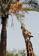 91408_Phoenix_Zoo_ Masters...