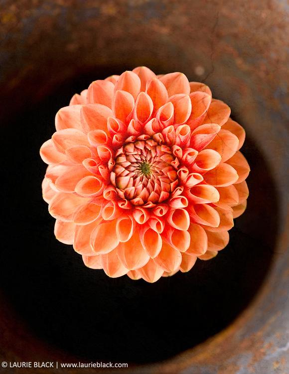 Orange flower botanical photo