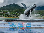 "Nature expert and sculptor R.T. ""Skip"" Wallen created ""Tahku"", an impressive 6.5-ton, 25-foot tall breaching humpback whale statue with fountains and lights, completed in 2018 in Overstreet Park along the Seawalk near Juneau-Douglas Bridge, in Juneau, Alaska, USA. Tahku celebrates 50 years of Alaska statehood 1959-2009. The City and Borough of Juneau is the capital city of Alaska and the second largest city in the USA by area (only Sitka is larger). This unified municipality lies on Gastineau Channel in the Alaskan panhandle. Juneau has been the capital of Alaska since 1906, when the government of what was the District of Alaska was moved from Sitka. The city is named after a gold prospector from Quebec, Joe Juneau. Isolated by rugged terrain on Alaska's mainland, Juneau can only be reached by plane or boat. Downtown Juneau sits at sea level under steep mountains up to 4000 feet high, topped by Juneau Icefield and 30 glaciers."