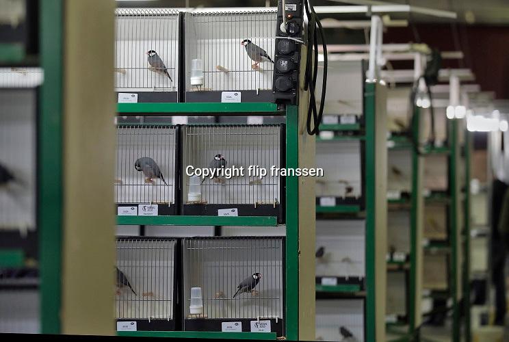 De Nederlandse Bond van Vogelliefhebbers, NBvV organiseert in de IJsselhallen te Zwolle onder de naam VOGEL 2020 de Nederlandse Kampioenschappen voor volièrevogels.Zij organiseert jaarlijks een nationale tentoonstelling, als afsluiting van het tentoonstellingsseizoen. De organisatie van dit evenement steunt grotendeels op honderden vrijwilligers.Zo'n 9.000 wedstrijdvogels van de hoogste kwaliteit en ingezonden door zo'n 1.000 inzenders uit geheel Nederland zijn te bewonderen. Er is een aparte competitie voor jeugdleden.Foto: Flip Franssen