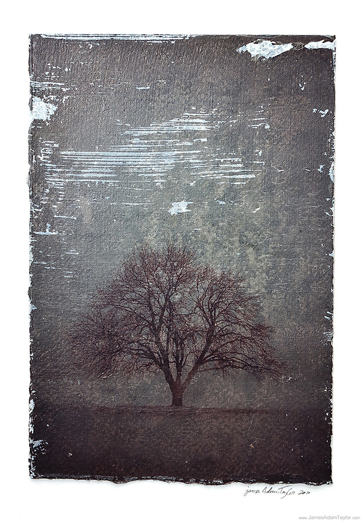 """Description:<br /> A tree alone in a snowy field.<br /> <br /> Medium: Acrylic Gel Transfer to Gessoed Watercolor Paper<br /> <br /> Size: image size is approximately 5"""" x 7"""""""" mounted on 9"""" x 12"""" watercolor paper with a dab of archival quality PVA.<br /> <br /> Edition size:<br /> 2<br /> Note:<br /> Each print is slightly different due to the transfer process. there are subtle differences in the areas without ink as well as some different textures."""