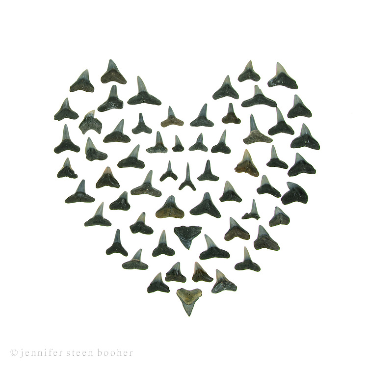 Love Bites: a darker twist on the Sailor's Valentine tradition. Shark teeth from Florida.