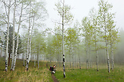 Obadiah Reid takes pictures in an aspen grove in fog along the Hankins Pass Trail, Lost Creek Wilderness, Colorado.