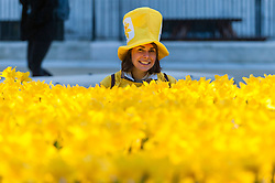 © Licensed to London News Pictures. 02/03/2017. London, UK. A Marie Curie volunteer poses at The Garden of Light, comprising 2,100 daffodils, which is currently on display in Paternoster Square next to St. Paul's Cathedral.  Each daffodil represents a Marie Curie Nurse, symbolising the care and support they give to families affected by terminal illness.  As part of the Great Daffodil charity, the display will be moved to other locations in the UK during March. Photo credit : Stephen Chung/LNP