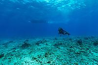 Sylvia Earle.Under Boat Seychelles