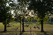 With the UK death toll reaching 38,161, a further 324 victims in the last 24hrs, and the governments pandemic lockdown still in effect,  Londoners enjoy the last moments of a summer evening in Ruskin Park, a south London green space, during the UK Coronavirus pandemic lockdown, on 29th May 2020, in London, England.