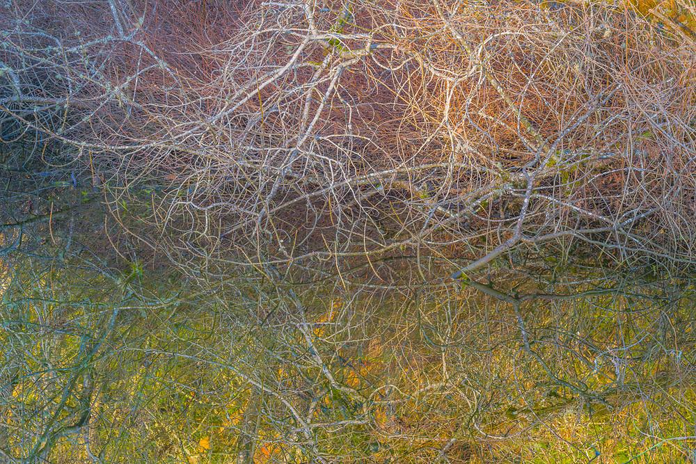 Abstract design, afternoon light, Snake Lake Park, Tacoma, Washington, USA