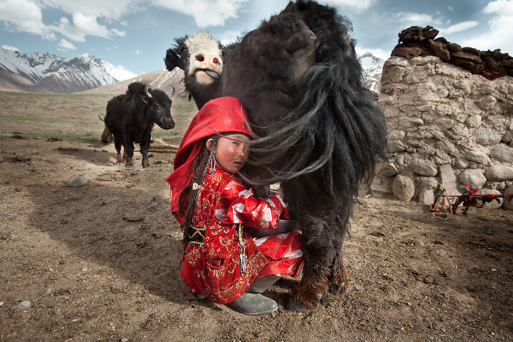 Twice a day, young Ayeem Khan milks the family's yaks in Afghanistan's Pamir mountains. Some of the milk curd will be dried for use in winter, when yaks give less.
