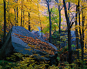 Huge boulders in hardwood forest at the base of Poke-O-Moonshine Mountain, Adirondack Park, New York.