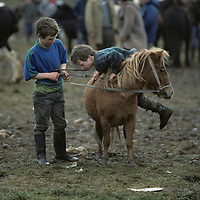 Europe, Ireland, Boys ride pony at Ballinasloe Horse Fair in County Galway on autumn afternoon