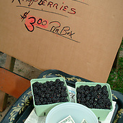 A box of Black Raspberries at a street side stand in Maine with an honor system bucket for paying for the berries.