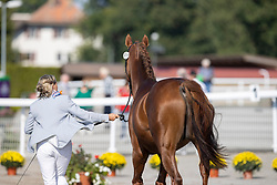 Donckers Karin, BEL, Leipheimer van't Verahof<br /> FEI EventingEuropean Championship <br /> Avenches 2021<br /> © Hippo Foto - Dirk Caremans<br />  22/09/2021