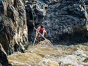 18 JUNE 2016 - DON KHONE, CHAMPASAK, LAOS:  A fisherman nets fish at Don Khone (also spelled Khon) Somphamit Waterfalls on the west side of Don Khon island.  Fishermen have constructed an elaborate system of rope bridges over the falls they use to get to the fish traps they set. Fishermen in the area are contending with lower yields and smaller fish, threatening their way of life. The Mekong River is one of the most biodiverse and productive rivers on Earth. It is a global hotspot for freshwater fishes: over 1,000 species have been recorded there, second only to the Amazon. The Mekong River is also the most productive inland fishery in the world. The total harvest of fish from the Mekong is approximately 2.5 million metric tons per year. By some estimates the harvest in the Tonle Sap (in Cambodia) had doubled from 1940 to 1995, but the number of people fishing the in the lake has quadrupled, so the harvest per person is cut in half. There is evidence of over fishing in the Mekong - populations of large fish have shrunk and fishermen are bringing in smaller and smaller fish.        PHOTO BY JACK KURTZ