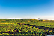 Photograph of the environment near Grinnell, Iowa, during the early summer of 2016.