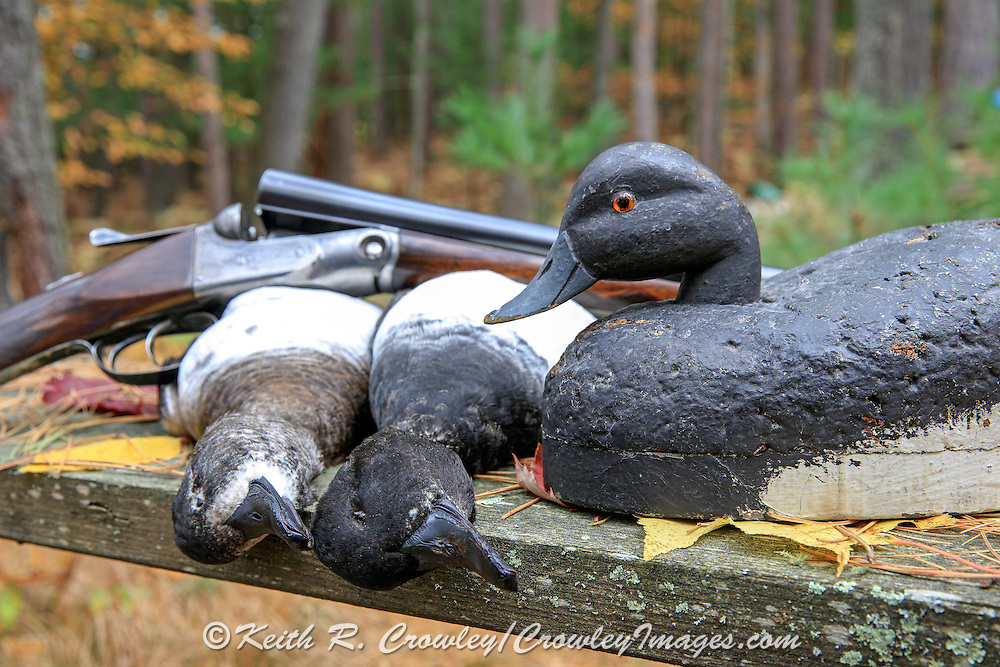 Bluebill hunting still life, with a decoy from Gordon MacQuarrie's set, carved by Ollie Drahn of Oshkosh, Wisconsin, ca. 1939.