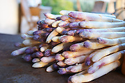 A big pile of white asparagus with violet tipped tip on a dark brown rusty iron table top Clos des Iles Le Brusc Six Fours Cote d'Azur Var France