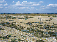 Shingle, Rye Harbour, East Sussex, UK