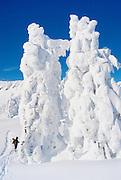 Backcountry Skiing, Mt. Baker, WA, USA.<br /> Trees frosted with record snowfall.<br /> Copyright 2003 Brett Baunton<br /> ©2003 Brett Baunton<br /> All Rights Reserved