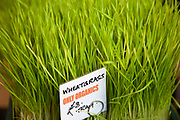 Organic Wheat Grass. Borough Market is a thriving Farmers market near London Bridge. Saturday is the busiest day.