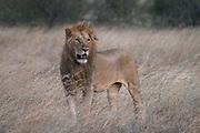 Kenya,wildlife