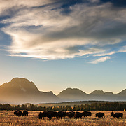 A cloud formation and bison at sunset over the Teton Range in autumn near Jackson, Wyoming.