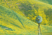 Yellow flowers bloom near Carrizo Plain National Monument during super bloom 2019.