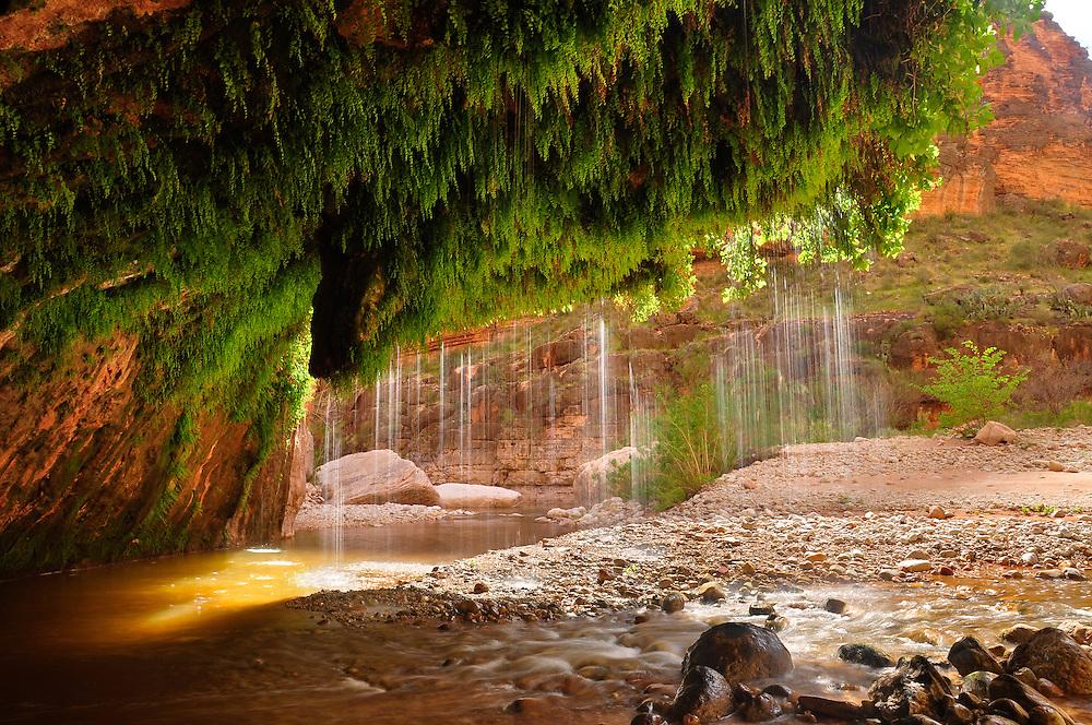 The waters of Showerbath Spring falling into Kanab Creek, Grand Canyon National Park, Arizona.