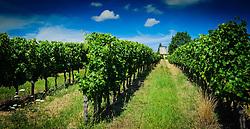 Vineyard in the Dordogne, France<br /> <br /> (c) Andrew Wilson | Edinburgh Elite media