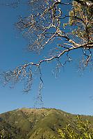 Scenic from Pine Ridge Trail, Big Sur, California.