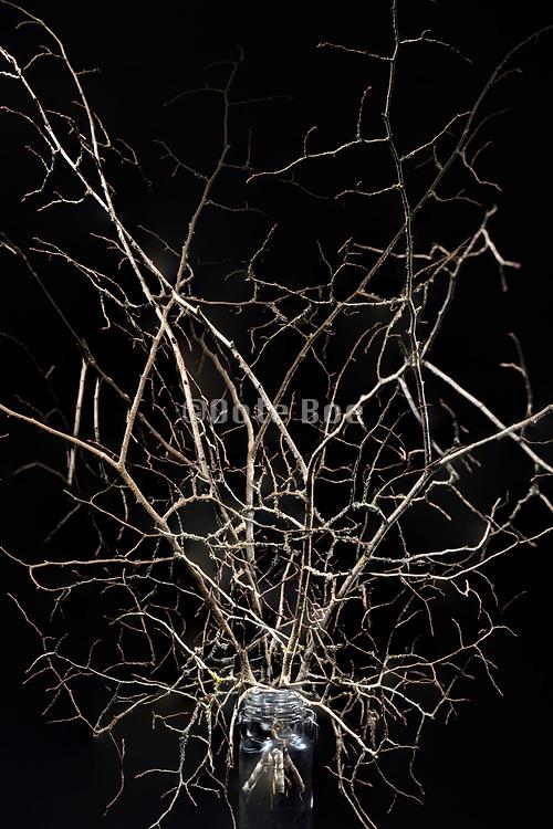autumn season twisted twigs without leaves floral bouquet composite composite