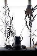 silhouette of wilted wild flower twigs and glove