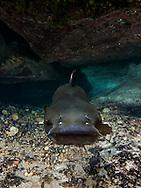 Channel Catfish<br /> <br /> Jennifer Idol/Engbretson Underwater Photography