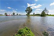 Nederland, Batenburg, Ravenstein, 8-5-2018 Bakenbomen langs de rivier de Maas gaan verdwijnen door het uitsterfbeleid van Rijkswaterstaat. Bij hoog water zijn de bomen een hulpmiddel voor navigatie, een baken voor de schippers. De Maasoevers moeten volgens RWS vrij zijn van obstakels en dus worden de bomen niet meer vervangen . Deze bakenbomen zijn karakteristiek voor het landschap langs  de rivier de Maas . De Maas krijgt de ruimte. Door de aanleg van natuurvriendelijke oevers ontstaat er een geleidelijke overgang van water naar land. Op veel plaatsen langs de meanderende maas zijn nevengeulen aangelegd om het water meer ruimte tegeven .Foto: Flip Franssen