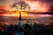 Cities emerge from the earth. Minerals turn into skyscrapers, buildings, high-rises. Cross-section of the earth and sky and alien atmosphere. Photoshop composite art of a sunset and a cross-section of the earth. Digital art photo of a sunrise landscape with mist in the foreground. The sun is peeking through a bare tree. Below the grass is a cross-section of the earth where we see minerals and crystals and buildings emerge from this soil on top.