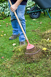 Scarifying a lawn with a rake to remove moss