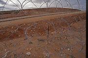 Occupied Territories, Israel, Palestine