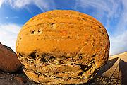 Round sandstone concretion<br /> Red Rock Coulee Natural Preserve<br /> Alberta<br /> Canada