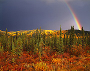 Autumn rainbow above boreal forest of white spruce, birch and willow covering hills north of the Alaska Highway and east of Northway, Alaska.