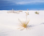 White Sands Yucca Plant, NM