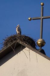 THEMENBILD - Weißstorch in seinem Nest auf einem Kirchendach bei Gutach im Schwarzwald // a white stork in its nest on a church roof in Gutach in the Black Forest, Germany on 2014/06/09. EXPA Pictures © 2015, PhotoCredit: EXPA/ Eibner-Pressefoto/ Fleig<br /> <br /> *****ATTENTION - OUT of GER*****