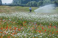 BRIELLE -  hole 10 met wilde bloemen,Kleiburg , golfbaan.  COPYRIGHT KOEN SUYK