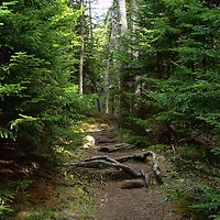 Hiking trail adjacent to the Sugarloaf Golf Club, Sugarloaf Mountain Ski Resort, Maine