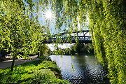 An early morning riverside walk alongside the Severn in Shrewsbury. The air was chilly from the Northerly wind but the sunshine did it's best to spread its warmth and brilliance over this green urban landscape. Birds called to each other and the willows rustled in the breeze. I've always loved strips of nature in urban areas and this river meander almost completely surrounds this ancient town with lush green watery landscape.